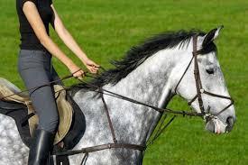 s'occuper d'un cheval